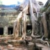 cambogia-angkor-wat-albero