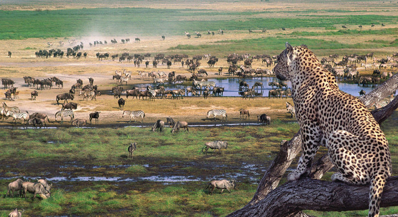 serengeti_wildlife